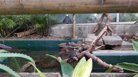 Plantasia Swansea | Day Out With The Kids