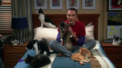 Sheldon Cooper on a Bed With Cats | Gifrific