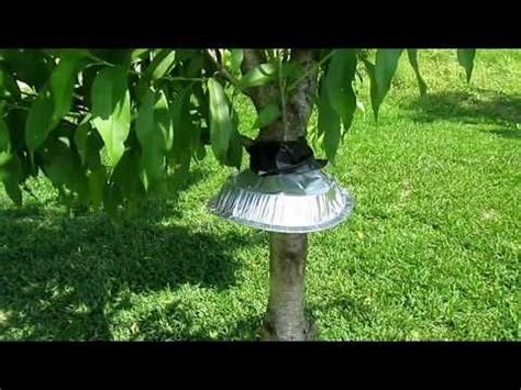 √ How To Prevent Squirrels From Climbing Trees - Fishing