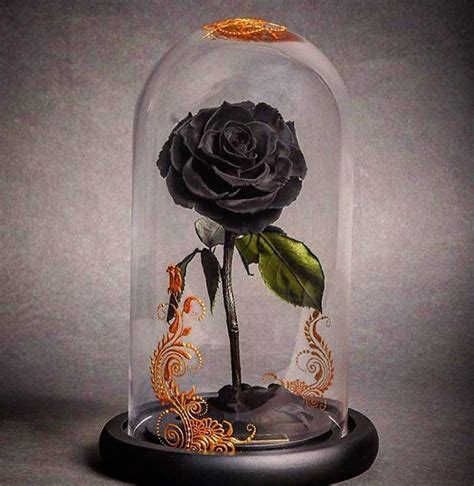 Beautiful 'Beauty And The Beast' Style 'Forever' Roses