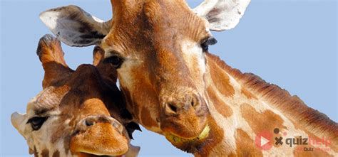 Can You Identify These Common Animals? Quiz Answers   Quiz