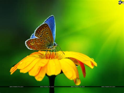 Full HD Wide Nature Wallpapers & Images I Beautiful Nature