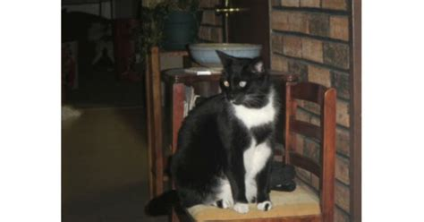 [UPDATE Sunday: Found] Missing Black and White Cat