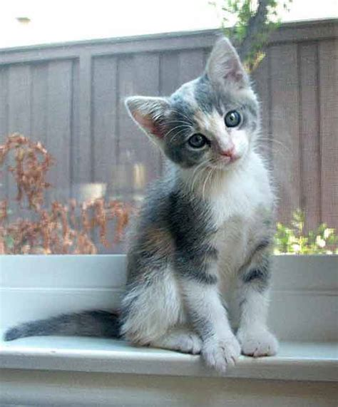 Calico Kittens: Great Photos of Cute Kittens