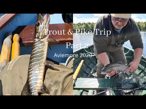 Of Esox & observations : Pike fishing - more thoughts