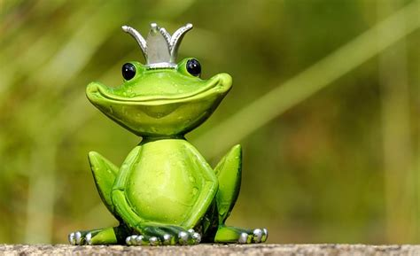 Frog's Fitness – Health and Fitness The Frog Way