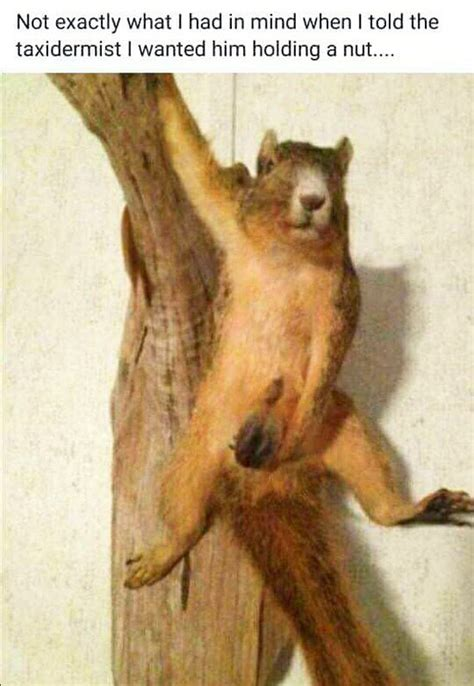 Taxidermy Fail - Mounted Squirrel Holding a Nut