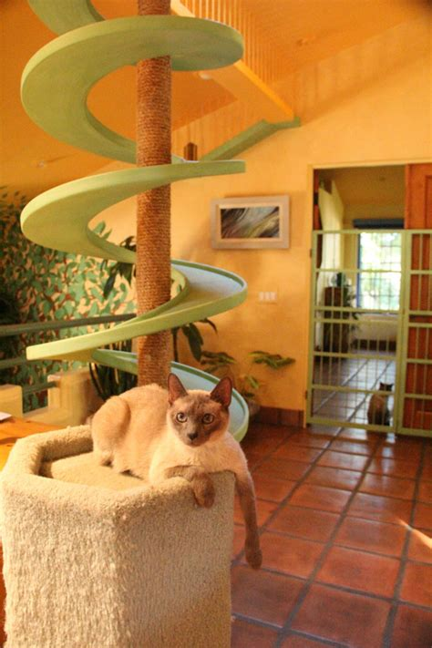 House of Nekko: How My Friend Made His Home a Cat Paradise