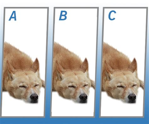Spot The Different Dog Quiz Answers   Quiz Help
